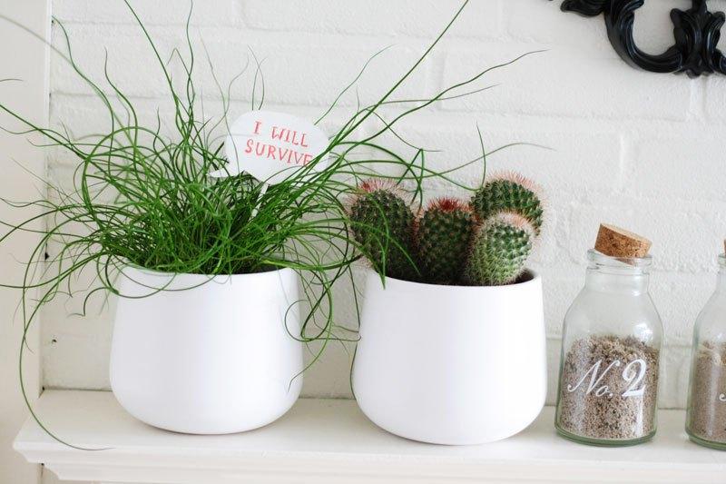 DIY Speak Bubbles For Your Plants