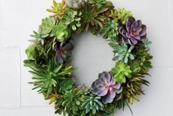 How to Make a Succulent Wreath With Real, Living Plants